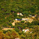 Rural landscape south of Saint Tropez, View from Gassin, FRANCE by Bruno Beach