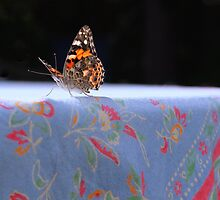 Painted Lady Butterfly by Sarah Beard Buckley
