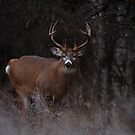 The 'Freak' - White-tailed Deer by Jim Cumming