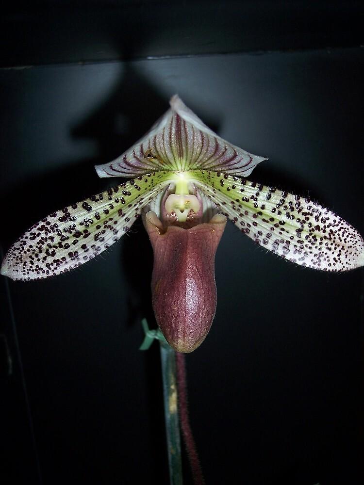 Flower porn by Nella Khanis