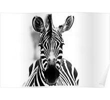 Zebra, Tanzania Poster