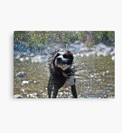 Let's shake it off Canvas Print