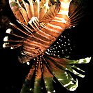 Lionfish ~ Japanese Style! by NICK COBURN PHILLIPS