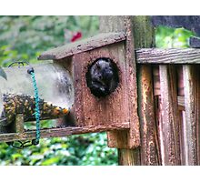Squirrel Buffet Photographic Print