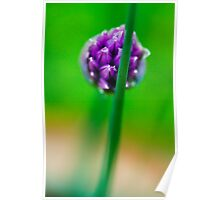 Chive Flower Poster