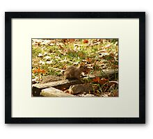 sweet baby squirrell freind Framed Print