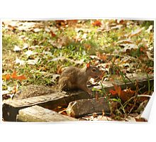 sweet baby squirrell freind Poster
