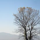 The mystery of autumn by Maria1606