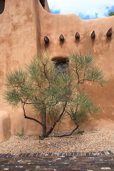 Santa Fe - Adobe Building and Tree by Frank Romeo