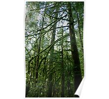 Westcoast rainforest Poster