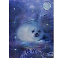 Baby Seal on Ice Photographic Print