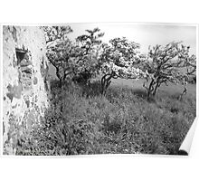 Old Stones - Ruined Cottage and Hawthorn Trees in Blossom, County Antrim, Northern Ireland. Poster