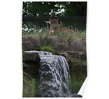 jaguar fountain  Poster