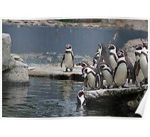 The penguins feeding Poster