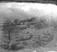 View through Veils - Cottage Window, County Antrim. by Laura Butler