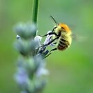 Bee with a Red Bonnet by rosie320d
