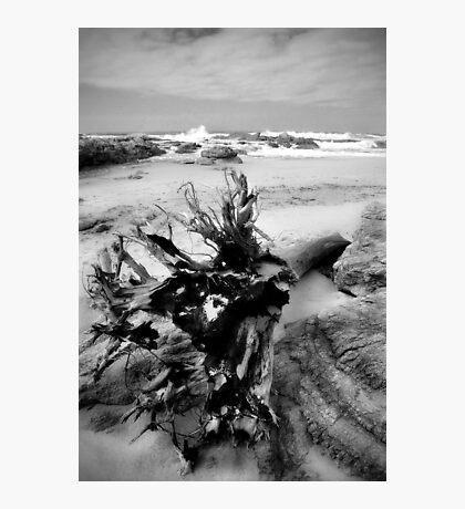 Adrift on Umzumbe beach, South Africa Photographic Print