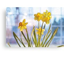 Birth Month Flower - March - Daffodil (Narcissus) Canvas Print
