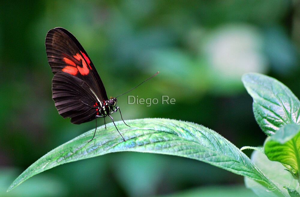 Red And Black On Leaf by Agro Films