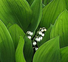 Birth Month Flower - May - Lily of the Valley by sitnica