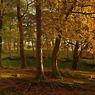 Autumn Trees by SylviaHardy