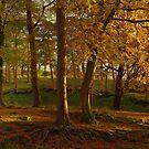 Autumn Trees by SylviaHardy