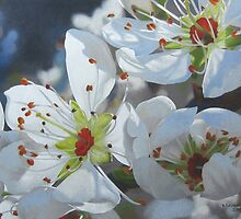 Blossoming by Heidi Schwandt Garner