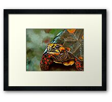 Red-footed Tortoise Framed Print