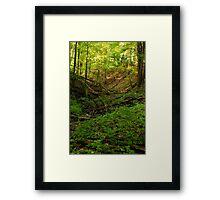 Green Ravine, Short Hills Provincial Park Framed Print