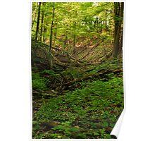 Green Ravine, Short Hills Provincial Park Poster