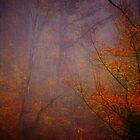 Storming Heaven by Ann Eldridge