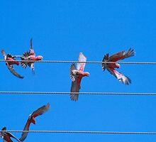 Fly Away by Bradd Munn