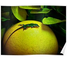 Grapefruit Green Jewel Poster