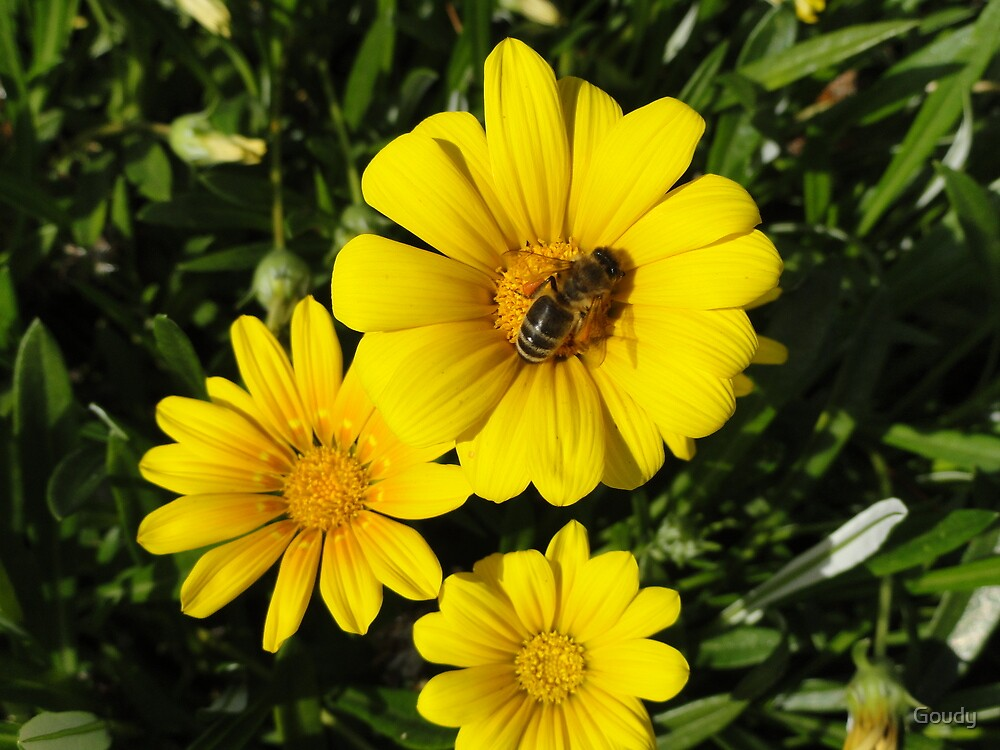 Foraging Bee by Goudy
