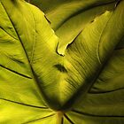 Green by Nella Khanis