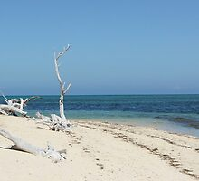 Deserted Beach - Green Island by astorms
