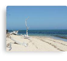 Deserted Beach - Green Island Canvas Print