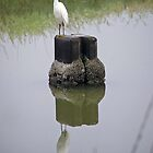 Great Egret - Corte Madera, Marin County, CA by Rebel Kreklow