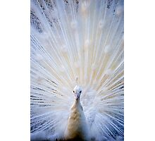 Albino Peacock Photographic Print