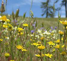 Field of Flowers by Tamijo
