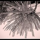 Snowy pine needles by soniarene