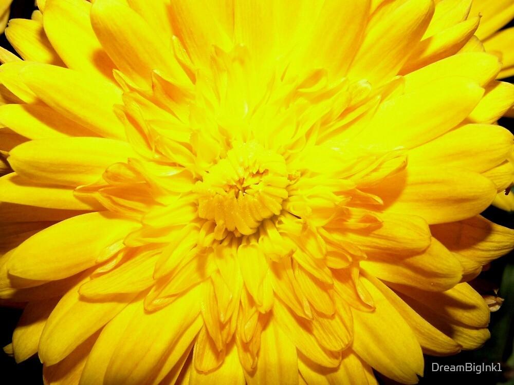 Bright Yellow Mum by DreamBigInk1