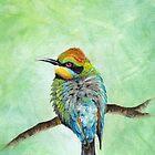 Rainbow Bee Eater by mevagh