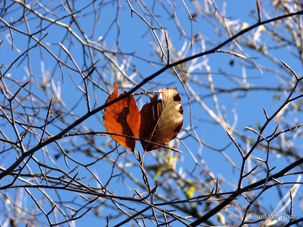 Last Leaves  by BlueMoonRose