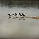 ~ Oyster Catchers ~ by Lynda Heins