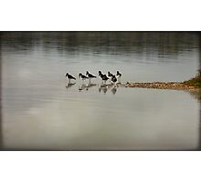 ~ Oyster Catchers ~ Photographic Print