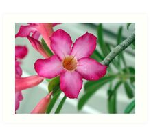 Pink flower with blue atmosphere Art Print