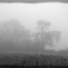 Fog on Roomer Common by Lindamell