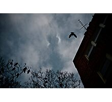 Birds of Dusk Photographic Print