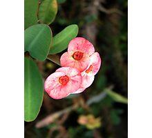 Cutey Pink Photographic Print